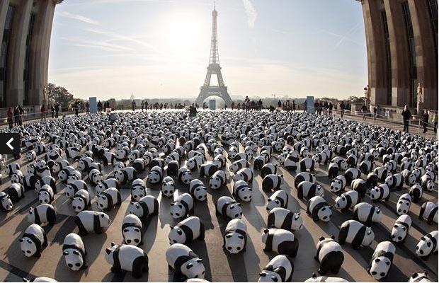 Pandas Paris