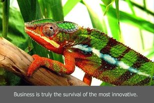 Chameleon_survival_of_most_innovative